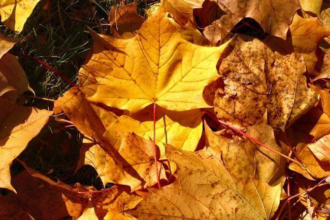 Дари осені: осінній колаж своїми руками