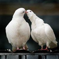 День Святого Валентина. Традиції святкування в країнах світу