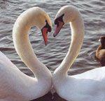 День всіх закоханих. Історія виникнення