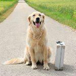 Де залишити собаку на час відпустки?