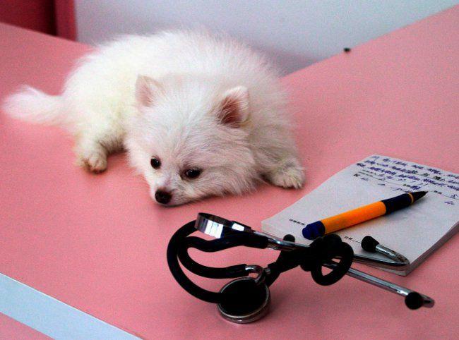 Як визначити, що ваша собака захворіла?