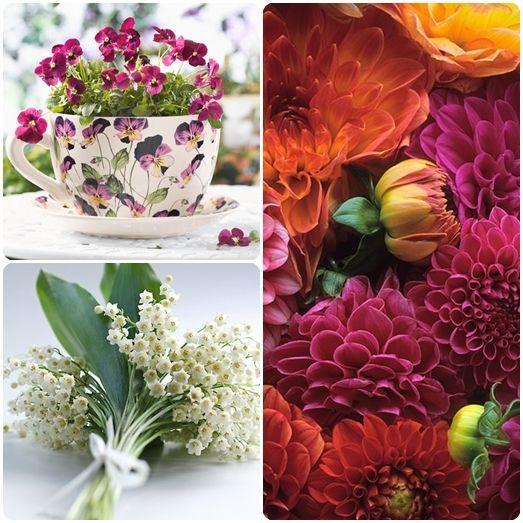 Які квіти дарувати на 8 березня