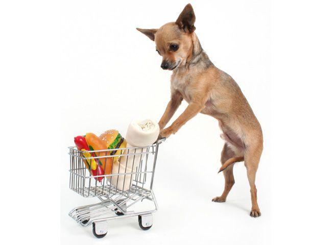 Карликові породи собак: чим годувати?
