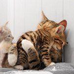 Кішка після пологів