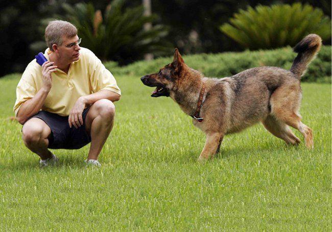 Навчання собак