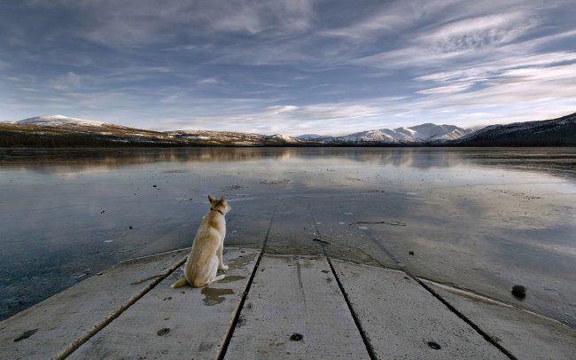 Загубилася собака: що робити?