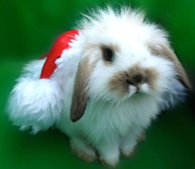 Привітання з новим роком Кролика
