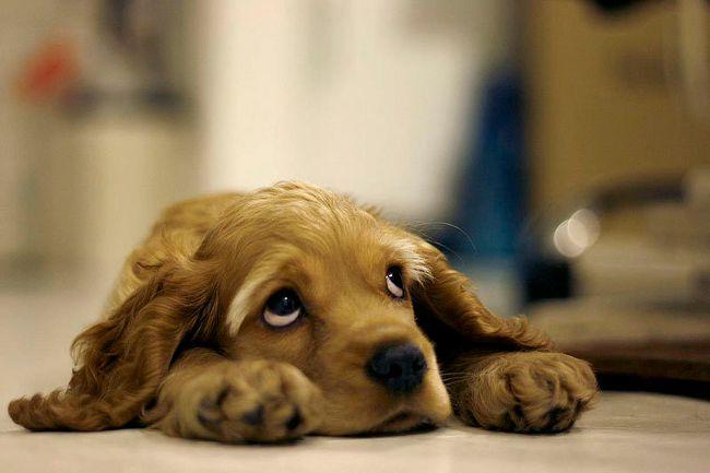 Собака скиглить: що робити?